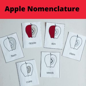 A is for Apple! 1